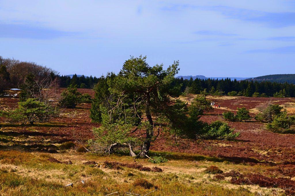Baum auf einer Heide